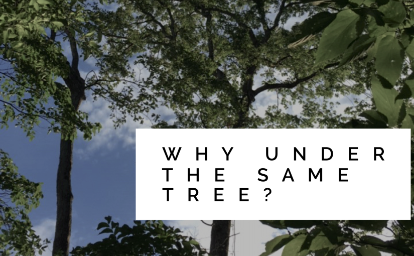 Why Under the Same Tree?